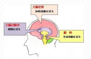 脳科学 マーケティング